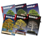 BONSAI ART-Sixpack